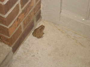 a froggy at our apartment!!